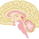自分のことを一番知っているのは、自分の脳です。