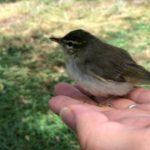 道路の真ん中にいた、緑色の小さな小鳥さん